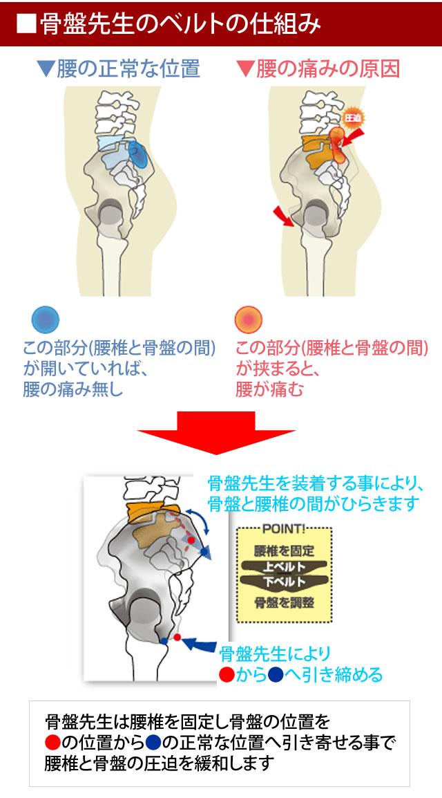 骨盤先生の仕組み